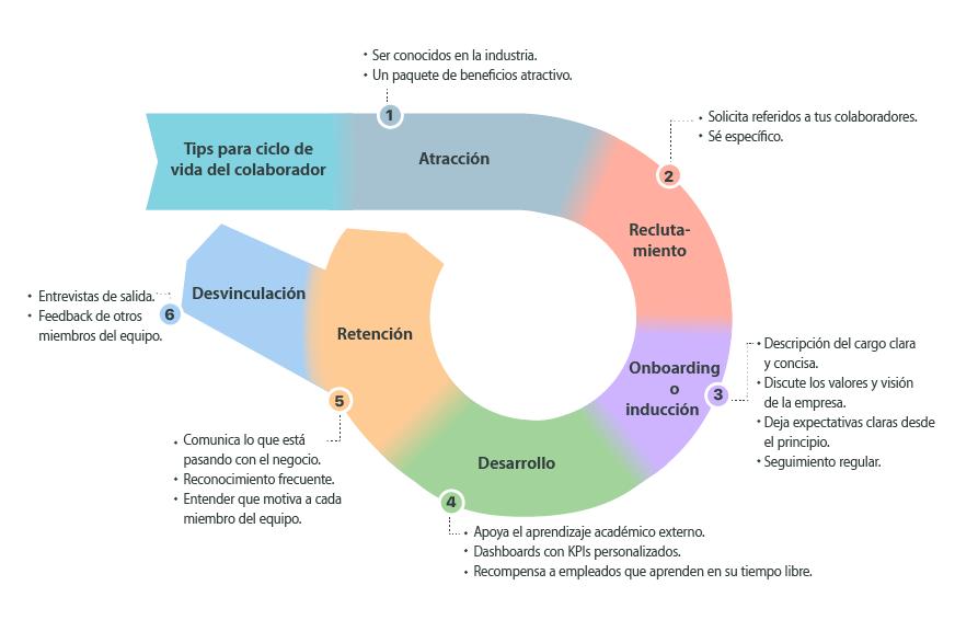 Las 6 etapas del ciclo de vida del colaborador
